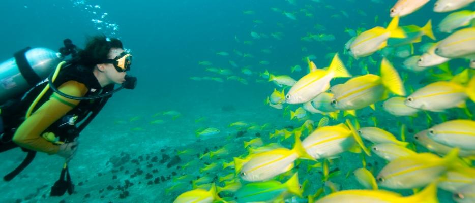 1573-fish